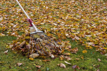 Cleaning up fallen leaves in autumn.