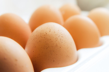 some chicken eggs on a light background