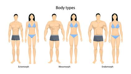 Human body types.