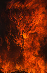 Inferno, Silhouette of a Tree Swallowed by Flames.