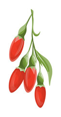 Isolated goji berries.