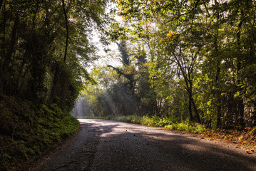 road in the midst of trees in autumn with the rays of the sun that filter the plants