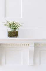 Plant on Mantle