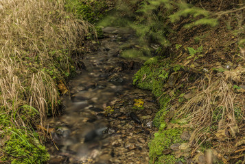 Small forest creek near Roprachtice village