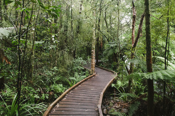 Boardwalk track, Te Waikoropupu Springs, New Zealand.
