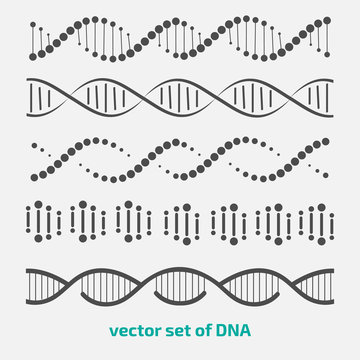 vector set of elements DNA.