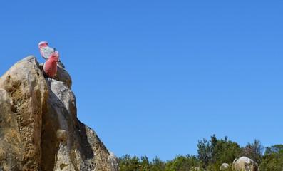 Papagei auf Pinnacle