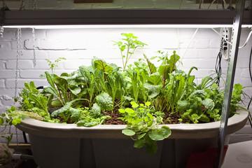 Aquaponics Vegetable Garden