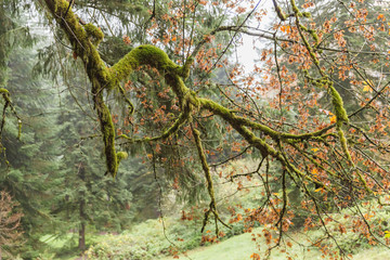 Mossy Tree Branches in Fall