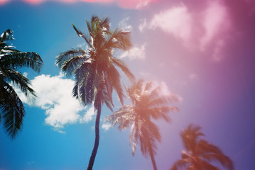 palm trees against pink and blue sky