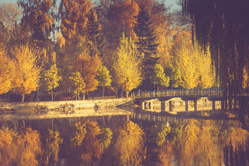 Autumn landscape in morning park. View of colorful trees and reflection in water. Filtered image:cross processed vintage effect.
