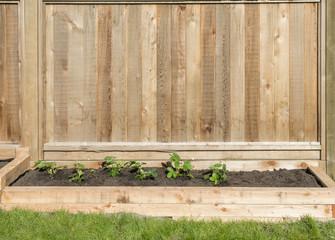 Start Of a Back Yard Garden