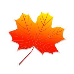 Realistic autumn leaf. Maple leaf.