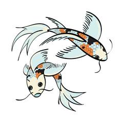 Calico Koi Fish