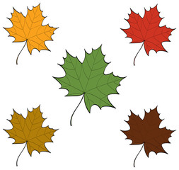 Maple Leaves in variations of autumn colours.