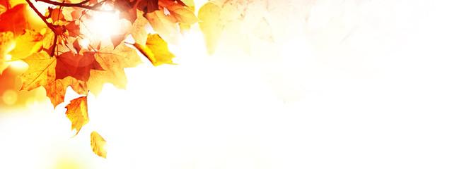 Goldener Herbst auf weissem Hintergrund Fototapete