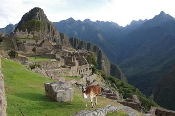 llama on the mahu picchu