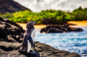 Fotobehang Pinguin cute small penguin standing on the rocks