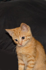 An adorable orange kitten portrait against a black backdrop. The little guy has an expression of curiosity.
