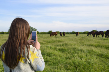 The girl takes pictures of horses grazing on the phone. Girl wit