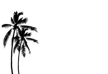 silhouette coconut tree on white background