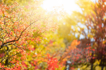 Sunny autumn day in the park, colorful tree leaves