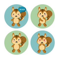 Cute squirrel icons icon vector illustration graphic design
