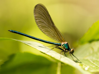 dragonfly in the park in nature