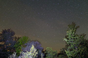 night landscape, forest and starry sky wit ursa major constellation