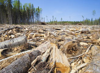 Logging operation in Canada