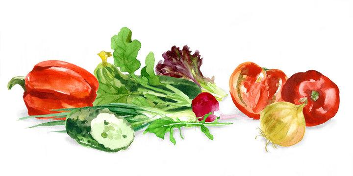 Watercolor food. Fresh vegetables