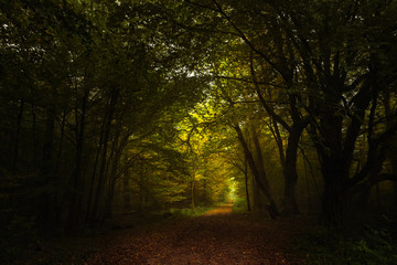 footpath through the dark autumn forest to the light, seasonal landscape with copy space or as a nature background