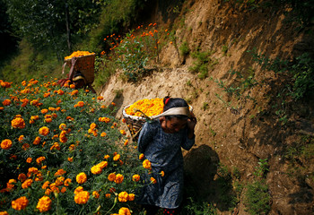 Women carry baskets filled with marigold flowers used to make garlands and offer prayers, in Kathmandu