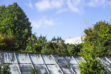 vintage retro glasshouse with green plants. background