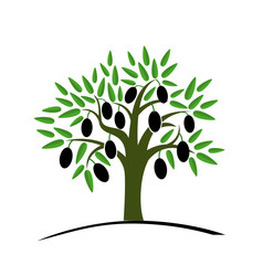Olive tree with green leaves. Tree with black olives. Vector illustration on a white background. Flat style.