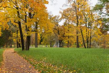 Autumn forest in Pushkin, Saint-Petersburg, Russia