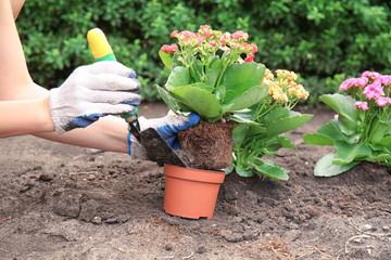 Foto op Plexiglas Tuin Woman transplanting flower into pot outdoors