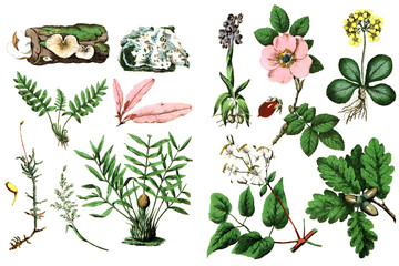 Illustration of plants on a white background.