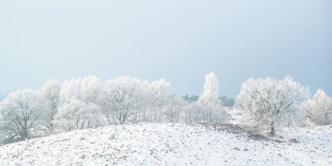 Panoramic winter view with snow of the Dutch Posbank in national park Veluwezoom