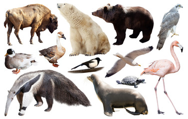 set of north american animals isolated Wall mural
