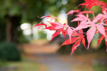 Herbstlstimmung auf dem Friedhof
