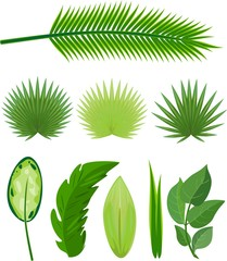 Set of different large green leaves of tropical plants on white background