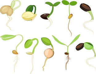 Set of different plant sprouts on white background