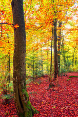 Autumn forest vertical background, yellow and red leaves on the trees