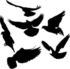 six pigeon black isolated silhouettes