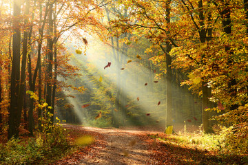 Foto op Canvas Bos Autumn forest