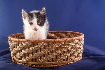cute little kitten sitting in a wicker basket on a blue background