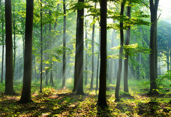 Forest landscape Fototapete