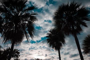 Silhouette of Palm trees near the beach On the day the sky have cloud was dense.