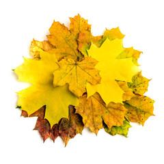 Heap autumn fall maple leaf isolated